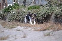 Banksia Park Puppies Poppy - 1 of 24 (7)