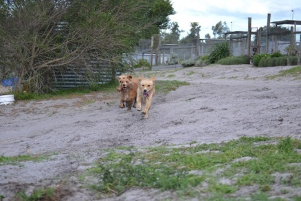 Banksia Park Puppies Sara - 23 of 39