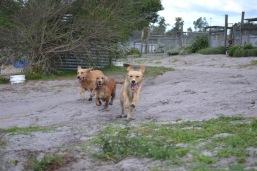 Banksia Park Puppies Sara - 24 of 39