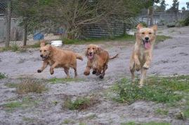 Banksia Park Puppies Sara - 25 of 39
