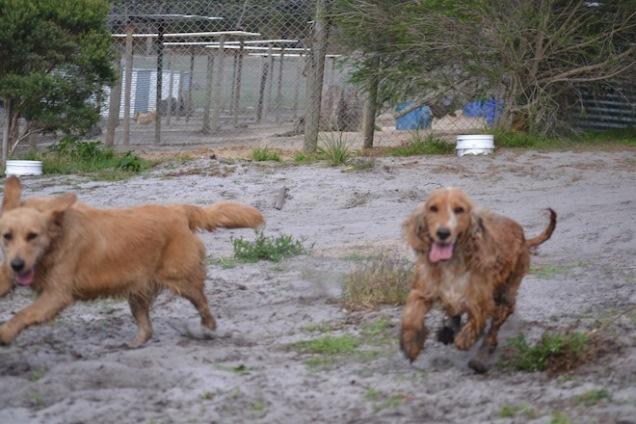 Banksia Park Puppies Sara - 26 of 39