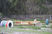 Banksia Park Puppies Sara - 29 of 39