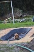 Banksia Park Puppies Sara - 33 of 39