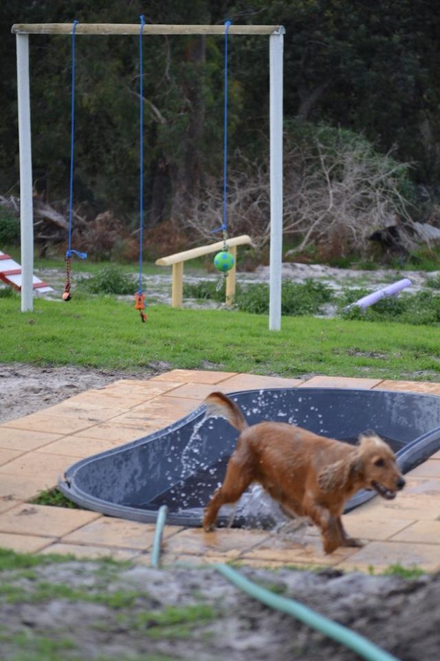 Banksia Park Puppies Sara - 34 of 39