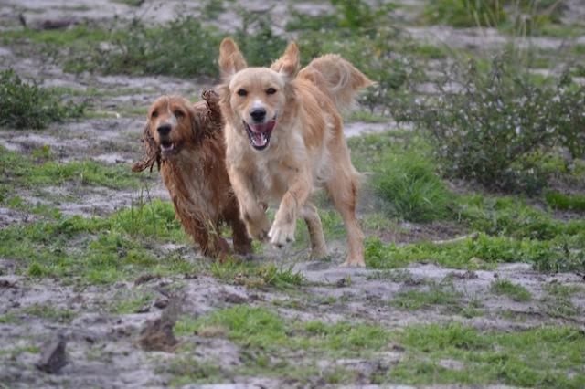 Banksia Park Puppies Sara - 36 of 39