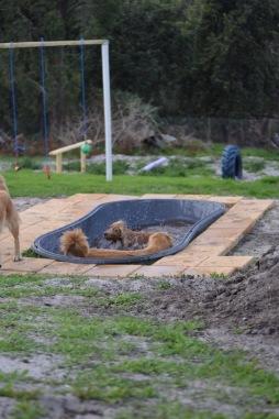 Banksia Park Puppies Sara - 39 of 39