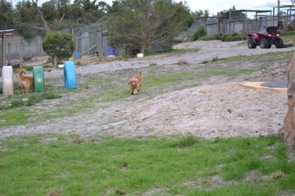 Banksia Park Puppies Sara - 4 of 39