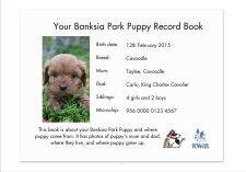 Banksia Park Puppies, your puppy information page