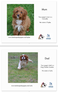 Banksia Park Puppies mum and dad information page