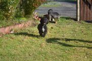 Banksia Park Puppies Fusspot
