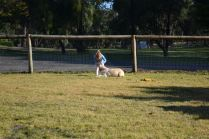 Banksia Park Puppies Oopsy - 9110