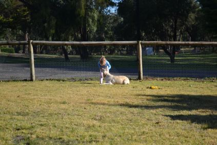 Banksia Park Puppies Oopsy - 9111