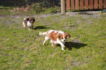 Banksia Park Puppies Avon Hekate
