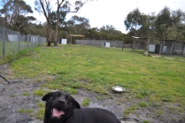 banksia-park-puppies-char-10-of-14