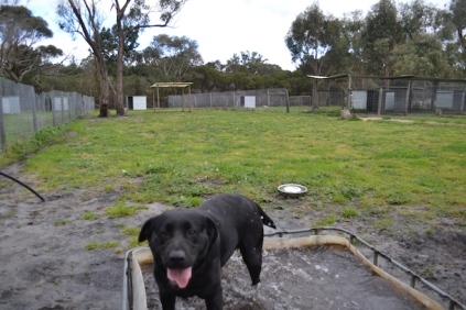 banksia-park-puppies-char-11-of-14