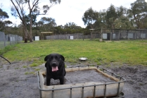 banksia-park-puppies-char-13-of-14
