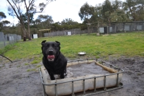 banksia-park-puppies-char-14-of-14