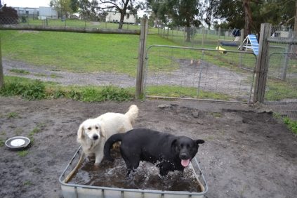 banksia-park-puppies-char-6-of-14