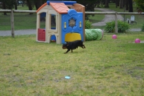 Banksia Park Puppies Chazzie - 9 of 39