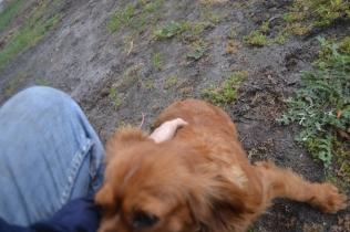 banksia-park-puppies-crunchie-12-of-25