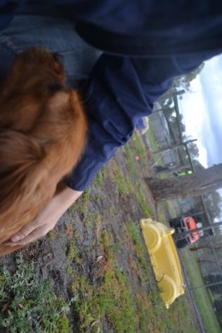 banksia-park-puppies-crunchie-15-of-25