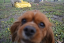 banksia-park-puppies-crunchie-19-of-25