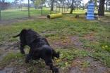banksia-park-puppies-crunchie-25-of-25