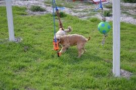 Banksia Park Puppies Cuzzle - 1 of 14