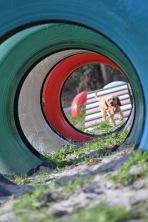 Banksia Park Puppies Cuzzle - 10 of 14