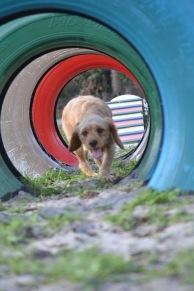 Banksia Park Puppies Cuzzle - 12 of 14