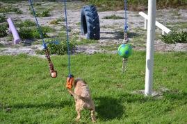 Banksia Park Puppies Cuzzle - 3 of 14