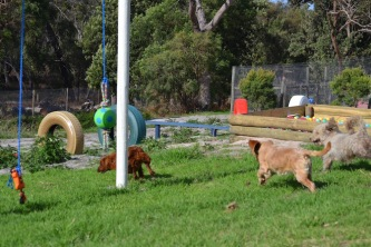 Banksia Park Puppies Cuzzle - 4 of 14