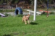Banksia Park Puppies Cuzzle - 6 of 14