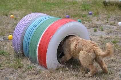 banksia-park-puppies-jacinta-wooster-ella-swoosh-17-of-51