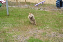 banksia-park-puppies-jacinta-wooster-ella-swoosh-22-of-51