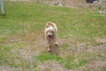 banksia-park-puppies-jacinta-wooster-ella-swoosh-23-of-51