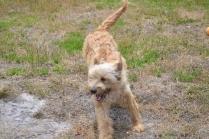 banksia-park-puppies-jacinta-wooster-ella-swoosh-24-of-51