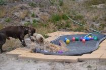 banksia-park-puppies-jacinta-wooster-ella-swoosh-31-of-51