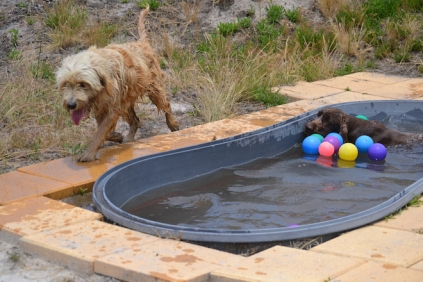 banksia-park-puppies-jacinta-wooster-ella-swoosh-38-of-51