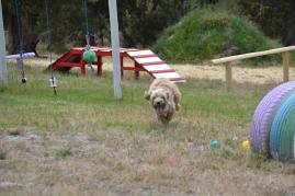 banksia-park-puppies-jacinta-wooster-ella-swoosh-4-of-51
