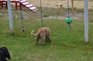 banksia-park-puppies-jacinta-wooster-ella-swoosh-40-of-51