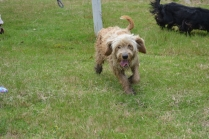 banksia-park-puppies-jacinta-wooster-ella-swoosh-44-of-51