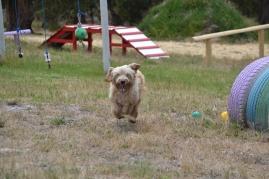 banksia-park-puppies-jacinta-wooster-ella-swoosh-5-of-51