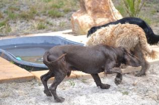 banksia-park-puppies-jacinta-wooster-ella-swoosh-50-of-51
