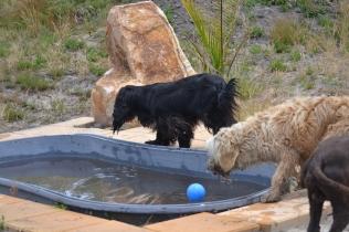 banksia-park-puppies-jacinta-wooster-ella-swoosh-51-of-51