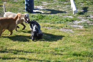 Banksia Park Puppies Luna - 19 of 48