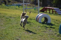Banksia Park Puppies Luna - 3 of 48