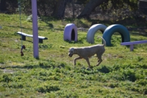 Banksia Park Puppies Luna - 33 of 48