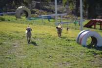 Banksia Park Puppies Luna - 4 of 48