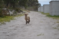 banksia-park-puppies-luna-5-of-11